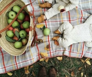 apples, autumn, and knit image