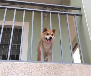chien, ete, and mignon image
