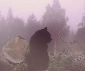 animal, fog, and forest image