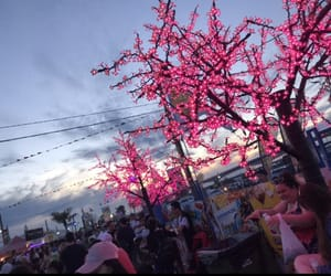 blossoms, crowds, and carnival image