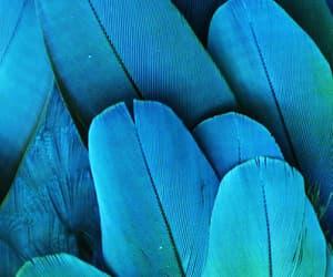 feathers image