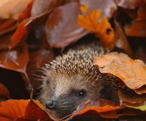 Animales, autumn, and otoño image