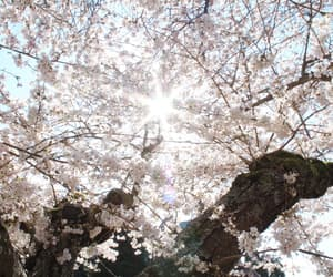 arbre, beautiful, and Fleurs image
