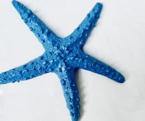star fish image