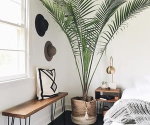 bedroom and plant image