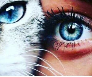 blue eye, girl, and white cat image