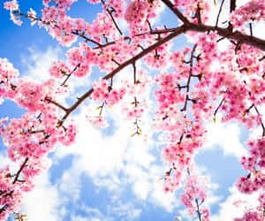 aesthetic, beautiful, and blossom image