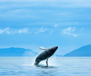 animals, photography, and whale image