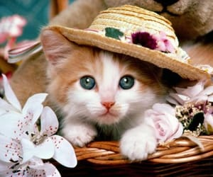 cat, kitten, and hat image