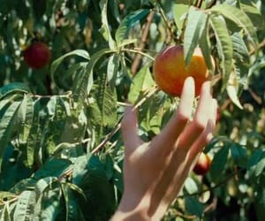 call me by your name, oliver, and peach image