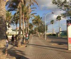 boulevard, palmtrees, and mallorca image