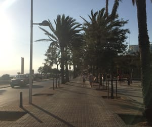boulevard, palmtrees, and sun image