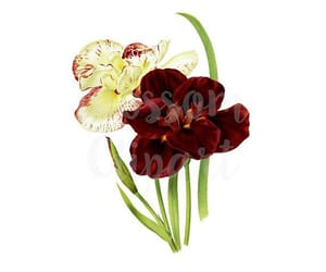 digital print, clipart flower, and etsy image