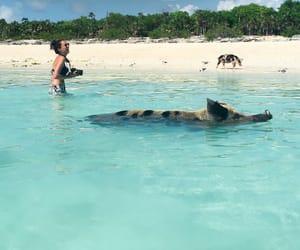bahamas, beach, and blogger image
