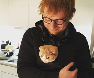 cat, pet, and ed sheeran image
