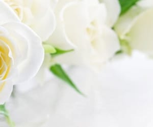 flower, rose, and white image