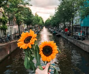 amsterdam, flower, and holiday image