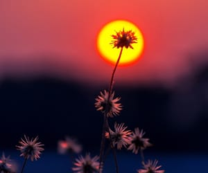 flower, pretty, and sunset image