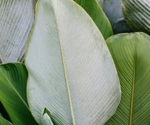 green, theme, and leaves image