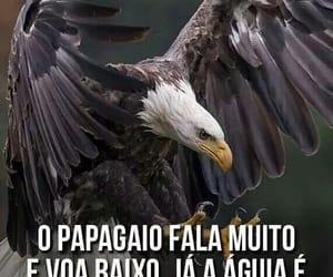 aguia image