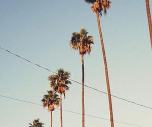 california, palm trees, and vintage image