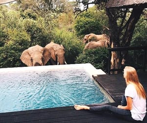 lodge, south africa, and private game reserve image