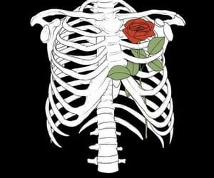 rose, skeleton, and wallpaper image