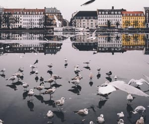 birds, city, and fly image