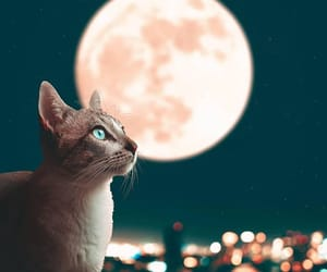 photography, animal, and cat image