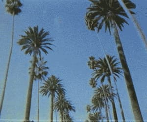 aesthetic, trees, and gif image