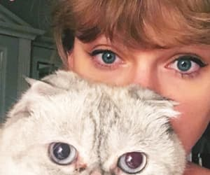 Taylor Swift, cat, and beautiful image