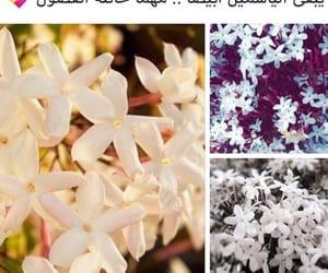 arab, جُمال, and ابيضً image