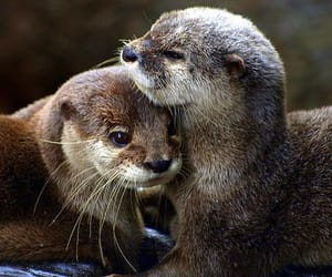 animal, otter, and love image