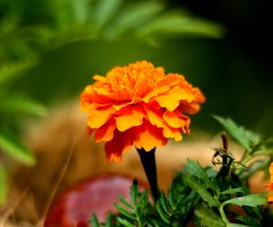 flower, landscapes, and phography image