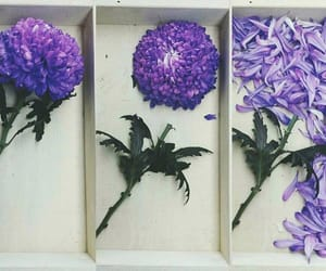 box, floral, and flowers image
