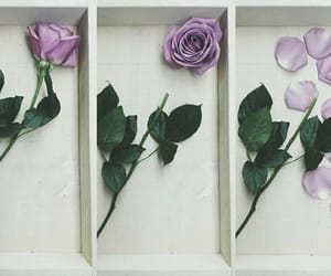 box, flora, and violet image