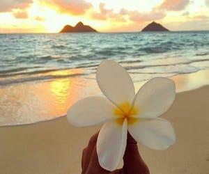 beach, flower, and sea image