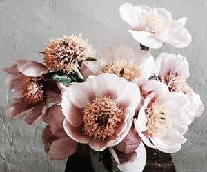 aesthetics, roses, and beautiful image