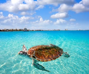 beach, mexico, and cancun image