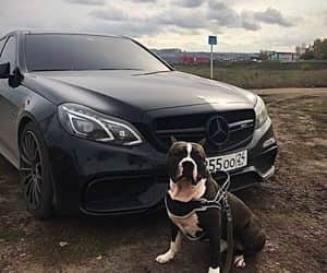 doggy, gangsta, and mafia image