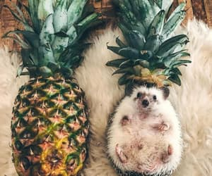 animals, pet, and FRUiTS image