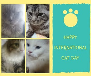 cats, mycats, and mykids image