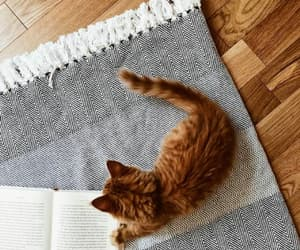 book, cat, and ginger image