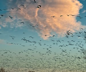 believe, birds, and clouds image