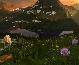 flowers, horses, and Glacier National Park image