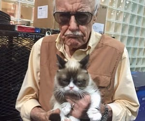 stan lee, cat, and funny image