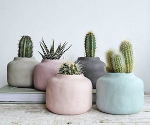 cactus, pastel, and plants image