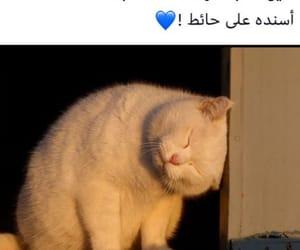 arab, arabic, and cat image