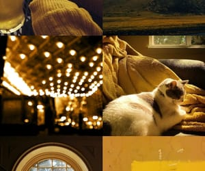 aesthetic, cat, and cosy image