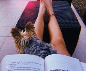 dog, summer, and book addiction image